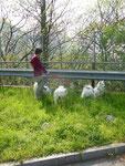 11.04.2014 Halt auf einer Raststätte im Tessin auf dem Weg nach Montichiari