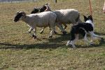 .... aja - ich weiss - Schafe!!!