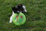 Die Frisbee ist fast größer wie ich!