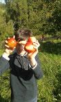 So tolle rote Äpfel haben wir auf der Streuobstwiese