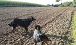 Auch die Hunde hatten ihren Spaß