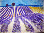 Lavendel, Ölkreide