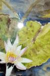 Aquarell - Wilhelma