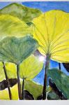 Aquarell - Lotus - Wilhelma
