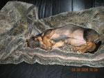 Ein Mittagsschläfchen auf Herrchen´s Couch ist doch gar nicht so verkehrt
