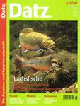 Ros, Christopher & Ros, Wolfgang (2007): Cephalosilurus apurensis - Ein gefräßiger Lauerräuber, aber nicht ohne Charme, D. Aqu. u. Terr. Z. (Datz) 60 (5): 38-42.