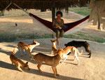 Eva hat eigentlich Angst vor Hunden; in Nazare waren es ihre besten Freunde. In der Nacht lagen bis zu sechs Hunde unter ihrer Hängematte und bewachten sie.