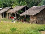 """Ursprünglich lebende Yanomamis sind von Natur aus Nomaden und bauen alle 10 Jahre ein neues Gemeinschaftshaus, """"yano"""" genannt. Da es in diesen Dörfern immer sehr viel Streit gab, riet man ihnen, die Häuser der Tucano-Indios nachzubauen."""