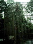 In einem Orang-Utan-Rehabilitationszentrum in der Nähe von Samarinda wurden ca. 500 Orang-Utan-Babys mit der Flasche aufgezogen und in einer 5-jährigen Schulung für das Leben in der Natur vorbereitet.