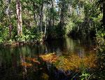 In dieses klare Wasser kann das Licht gut eindringen und die Pflanzen wachsen noch in einer Tiefe von zwei Metern.