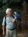 Gelbbrustara (Ara ararauna): Ein ganz liebes Tier, das man am liebsten nach Hause mitnehmen möchte.