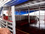 An Bord befand sich schon eine große Ladung mit Neonfischen von einem Fischer aus San Isabel.