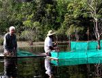 In diesen Behältern werden die Fische aufgesammelt und bis zum Abtransport zwischengelagert.