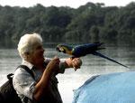 Gelbbrustara (Ara ararauna): Ich holte sogleich eine Banane heraus und prompt ließ sich der Vogel anlocken.