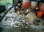 Unter den Fischen befanden sich viele, die wir aus der Aquaristik kennen.