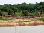 Hier und in den folgenden Fotos sehen Sie Landschaften am Tefésee bei Niederwasser, bei Hochwasser steigt der Rio Tefé um 10 Meter je nach Breite des Flussabschnittes.