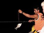 Rio Tefé-Reise 2010: Köderfisch an der Fangleine für große Raubwelse.