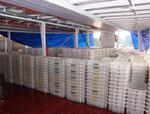 Bei dieser Ladung mit 1.700 Stapelwannen zu je ca. 700 Fischen befanden sich über eine Million Rote Neons (Paracheirodon axelrodi) an Bord.