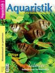 Ros, Wolfgang (2008): Ein Schmuckstück im Aquarium: Der Raubwels Pimelodus ornatus, Aquaristik-Aktuell (4): 54-57.