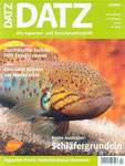"""Ros, Wolfgang & Schmidt, Jakob (2008): Calophysus macropterus: Ein """"Hai"""" im Süßwasseraquarium: D. Aqu. u. Terr. Z. (Datz) 61 (4): 16-18."""