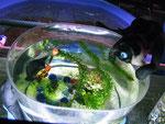 Ein Aquarium in ungewohnter Form.