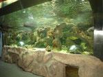 Die neueste Attraktion: Ein ganz spezielles Aquarium, ausgerüstet mit einem Brandungsriff.