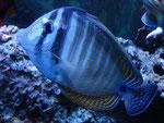 Meerwasseraquaristik im Albaquarium