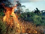 In der Trockenzeit wurde überall unkontrolliert das Gras angezündet.