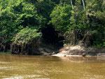 Seitenbäche sind oft eine Verbindung zu einem Urwaldsee, in dem viele interessante Fische wie der Diskus oder andere Buntbarsche und Welse leben. Bei Niederwasser trocknen diese Flüsse oft aus und die Seen sind dann für uns Fischnarren unerreichbar.