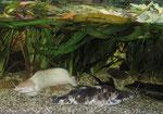 Froschwelsbecken