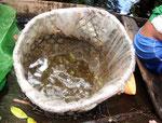 In seinem Korb haben 1.000 Neonfische Platz.