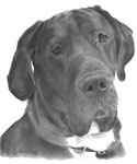 In loving memory of Tyson the Great Dane