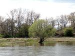 im Elbe Naturschutzgebiet