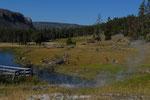 Elk Yellowstone NP