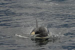 Orcas Vacouver Island - Telegraphe Cove