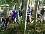 竹林の管理、竹の扱い方