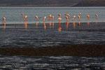 Lac Abbe, Dschibuti