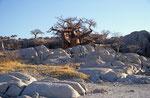 Kubu Island, Sowa Pan, Makgadikgadi Pan Nationalpark