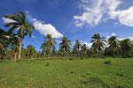 Palmenhain, Salto del Limon, Dominikanische Republik