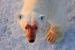 Eisbär, Erik Eriksenstretet