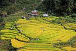 Reisterrassen im Keerong Valley