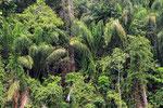 Regenwald, Upper Suriname River, Surinam