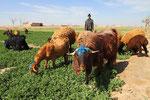 Schäfer in der Nähe von Isfahan