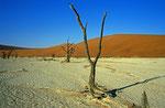 Dead Vlei, Namib Naukluft Park