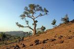 Landschaft bei Bahir Dar