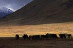 Jalang, Pshart-Tal,  Pamir, Tadschikistan