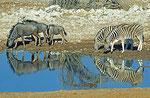 Wasserstelle Okaukuejo, Etosha Nationalpark