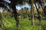 Landschaft in der Nähe Salto Limon, Dominikanische Republik