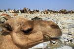Salzgewinnung am Ass-Ale Salzsee, Danakil-Senke, Äthiopien