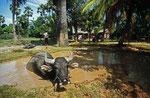 Dorfansicht, Kambodscha
